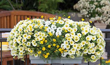 Supplying Garden Centres